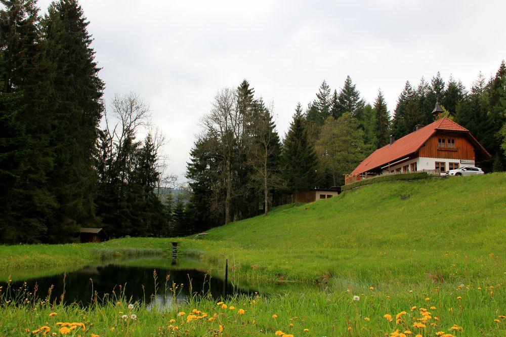Baiersbronn Buhlbacher Forelle