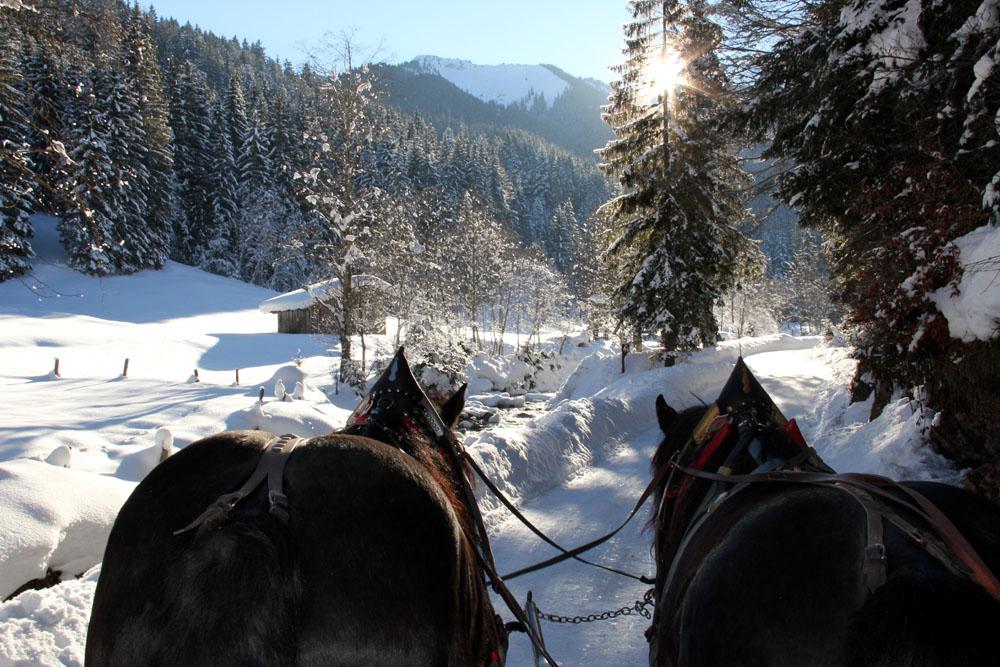 Schwarzleotal_Pferde