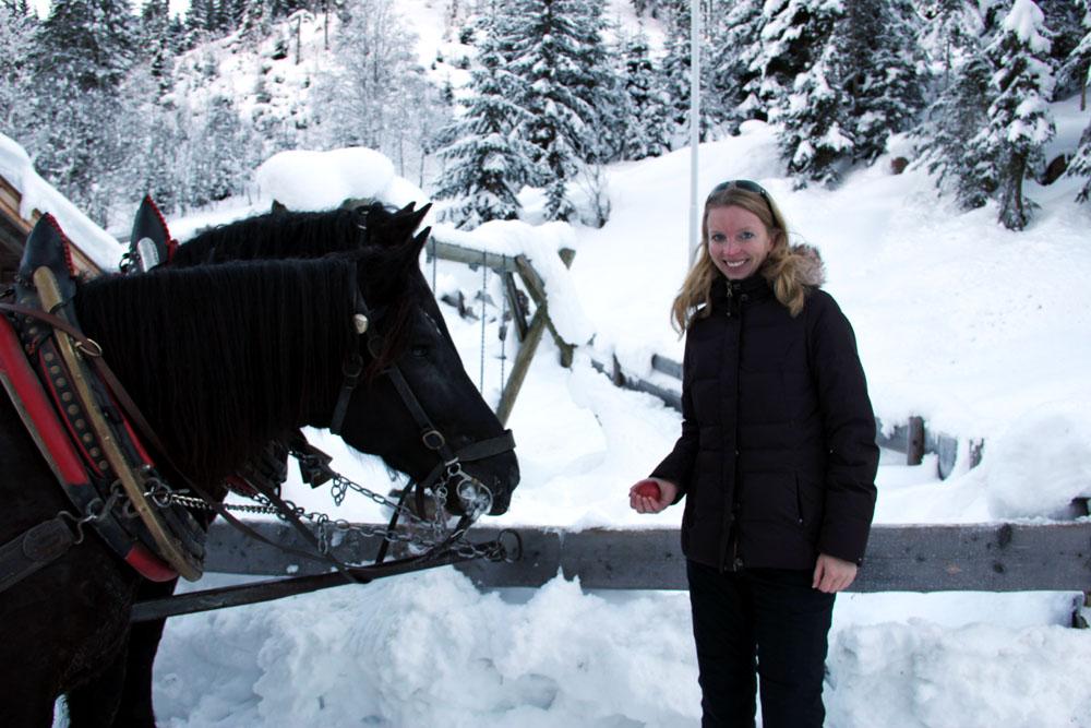 Schwarzleotal_Pferde_füttern