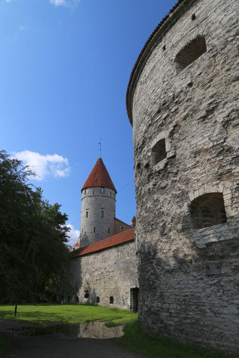 Dicke_Magarethe_Tallinn