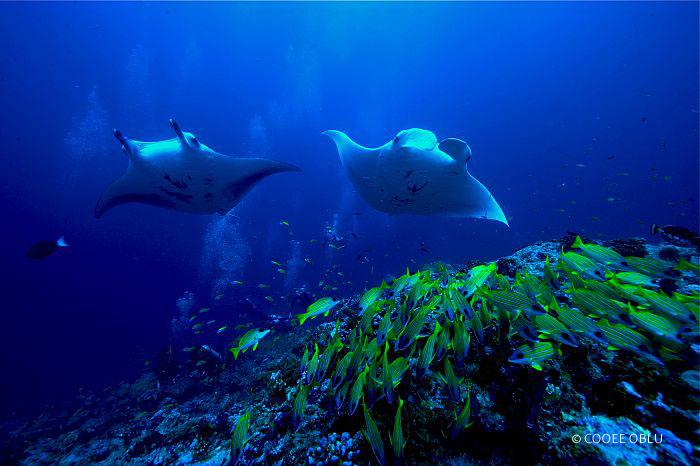 Unterwasserwelt Oblu Atmosphere Maledives