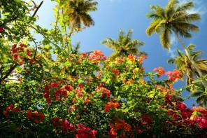 St.Lucia_Diamond Botanicac Garden