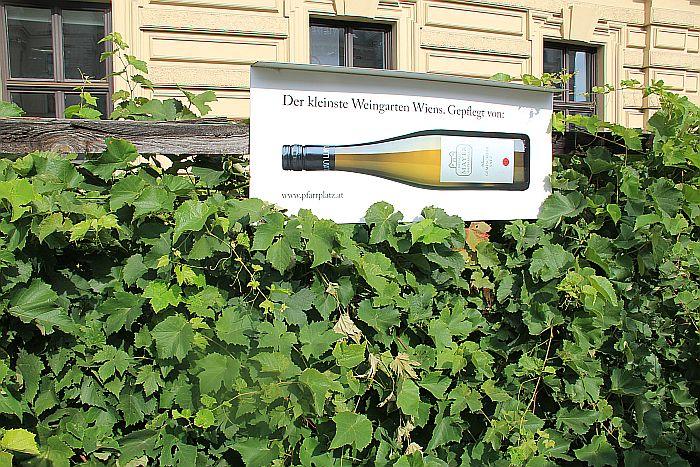 Wien Vienna Wein Weingarten