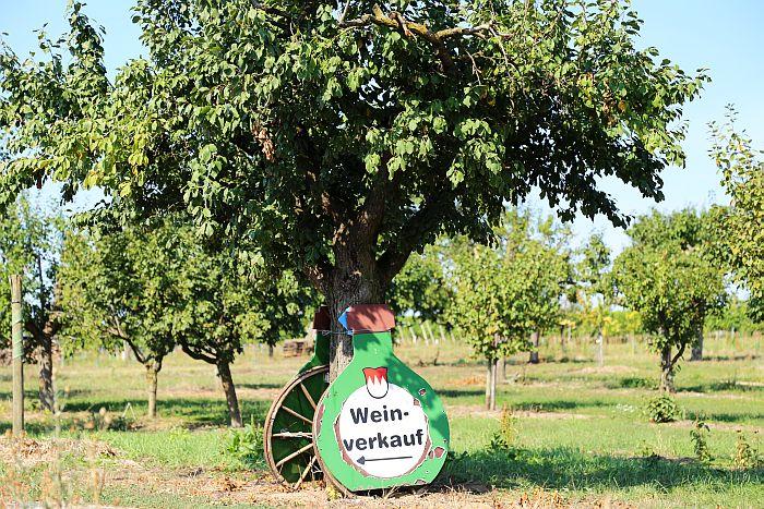 Franken Bocksbeutel Wein Fränkisches Weinland