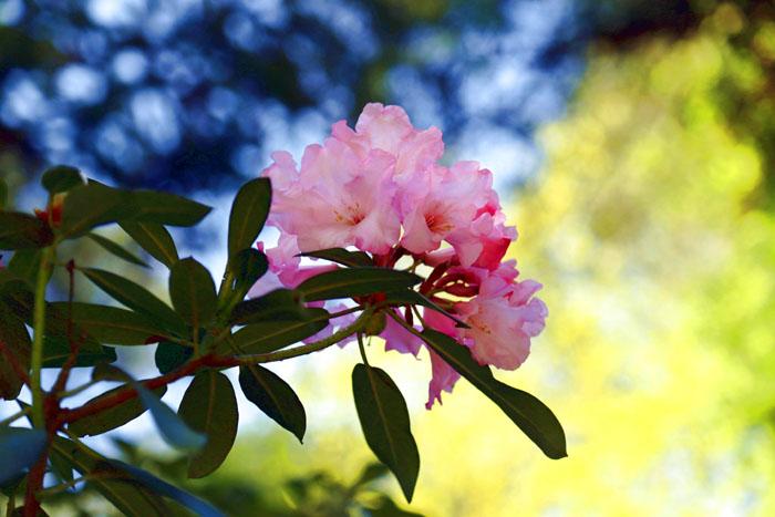 Rhododendron Kurzurlaub Ammerland