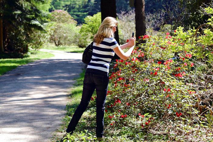 Rotblühende Rhododendren Kurzurlaub Ammerland