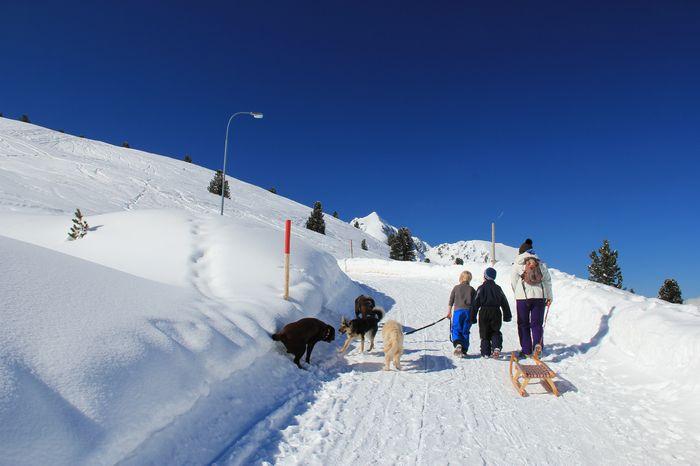 Skigebiet Kühtai Schlitten Rodeln