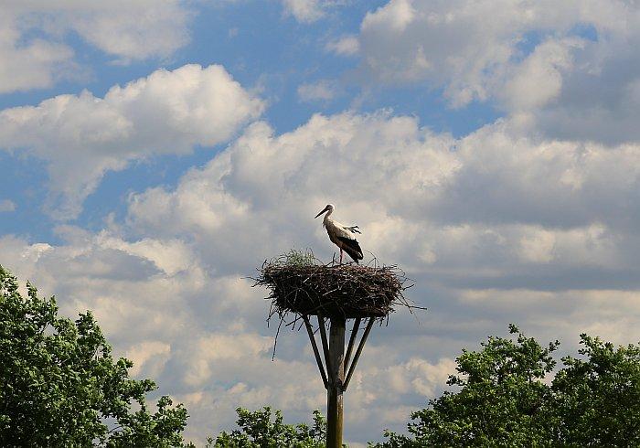 Masuren Masurische Seenplatte Storch