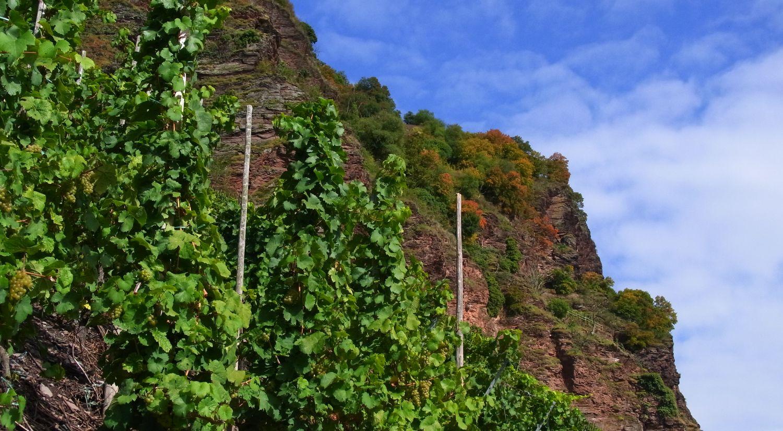 Mosel Wein Traben-Trarbach Kurzurlaub