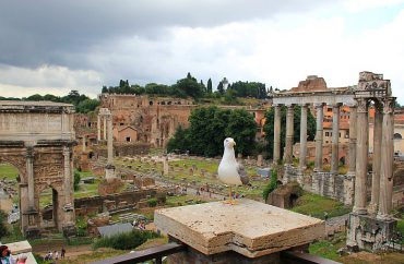Rom Kurzurlaub Forum Romanum Möwe