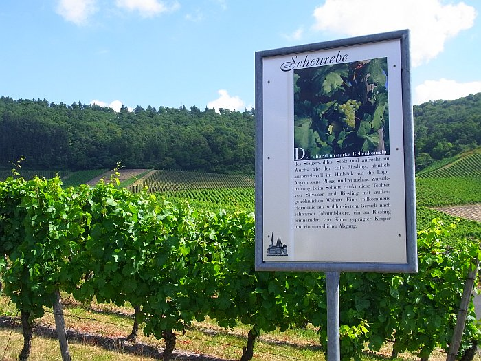 Iphofen Wein Franken Schwanberg Weinlehrpfad