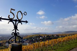 Rheingau - 50ster Breitengrad