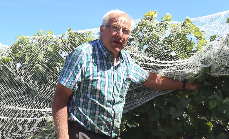 Neuseeland Seifried Hermann Wein Weingut