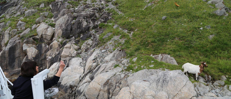 Lysefjord Ziege Norwegen